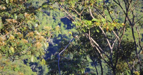casas_viejas_minca_birdwatching_web5